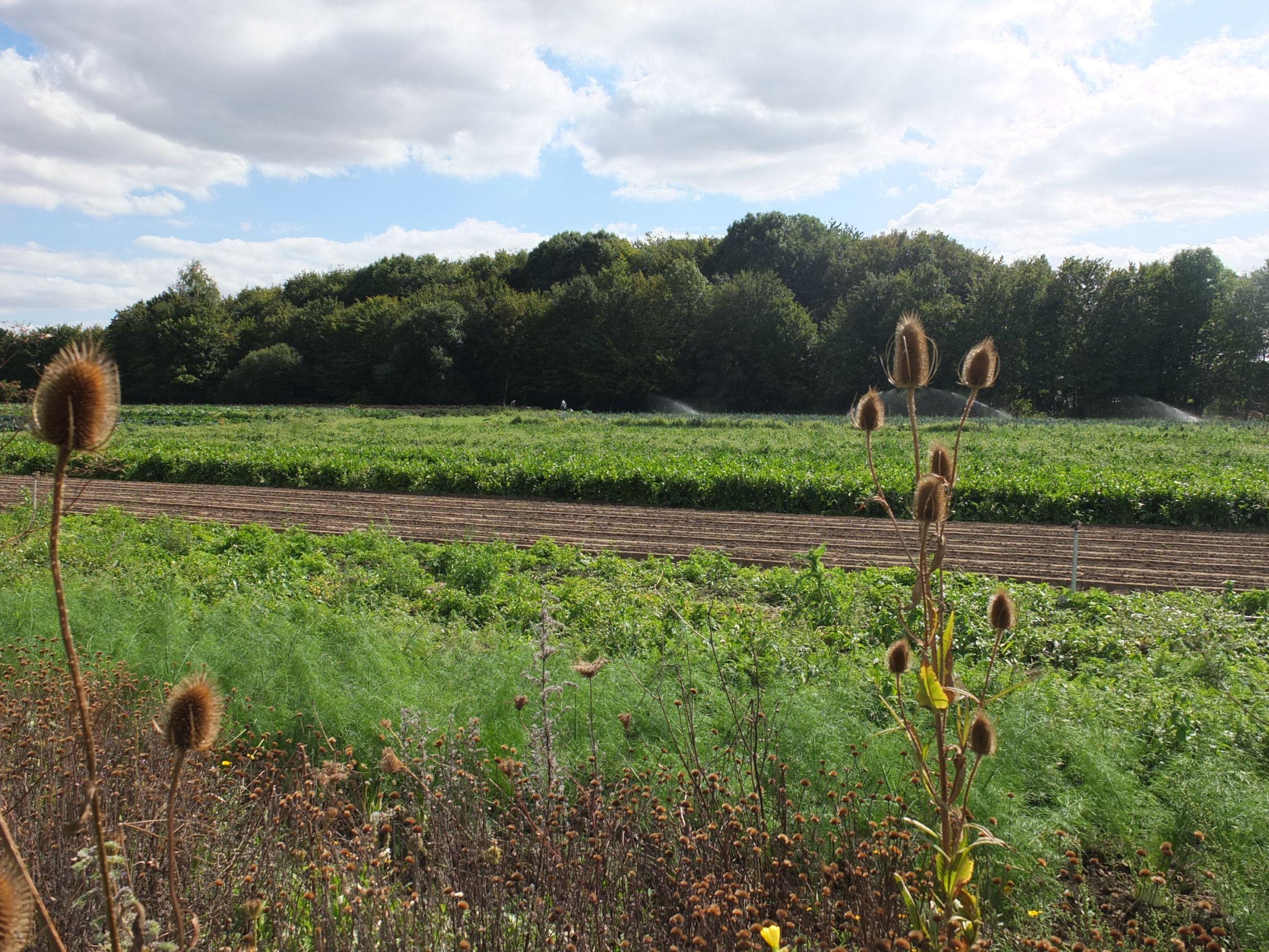 Felder der Werkhof Gärtnerei